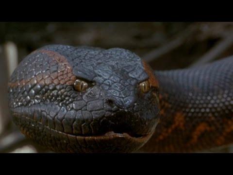 belgesel izle  dünyanın en ölümcül yılanları