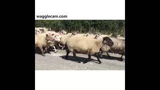 Crazy Farm Animals: A Funny Compilation