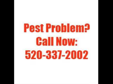 how to kill bed bugs Tucson AZ