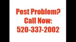 how to kill bed bugs Tucson AZ