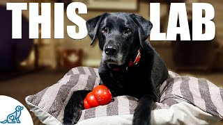 10 Lessons A Labrador Retriever Taught Me About Dog Training
