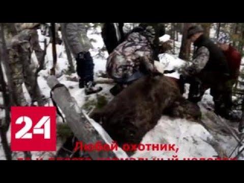 Убил медведя в берлоге: губернаторская охота взорвала соцсети - Россия 24