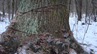 Бандитизм в Центральном парке Менделеево(, 2014-01-03T08:29:40.000Z)