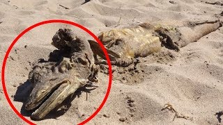 5 Mysterious Creatures Caught In England!
