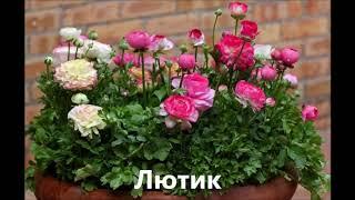 правильно подбираем цветы для клумбы