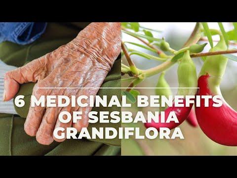 6 Effective Medicinal Benefits of Sesbania Grandiflora