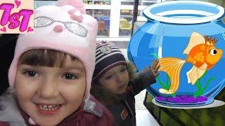Покупаем рыбок. Запускаем рыбок в аквариум. Первый опыт. Новые жители нашего дома.