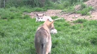 兄弟で狩りごっこ♪ HPはこちら↓ http://narumi-1122-duct.wix.com/wild-...