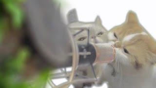 猫ひろしさんが猫48匹グループ ニャンニャン合唱団とコラボした経緯を...