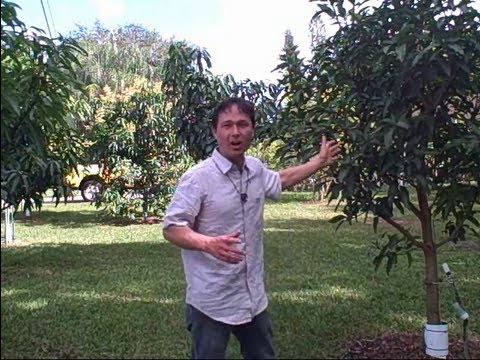 1 Acre Home Orchard in South Florida Yields Over a Thousand of Pounds of Tropical Fruit a Year