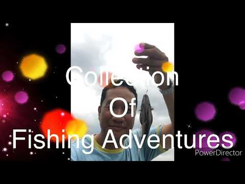 Collection Of Fishing Adventures