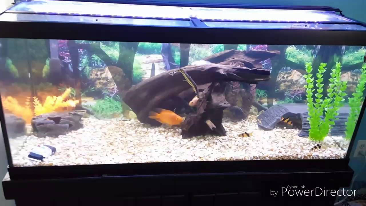 & Ebay Aquarium LED Lighting 75 Gallon Tank - YouTube