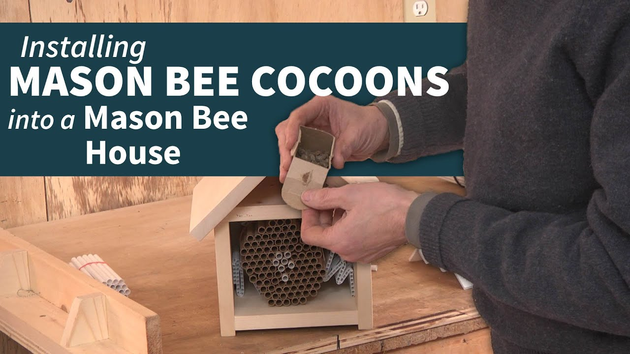Installing Mason Bee Cocoons Into A House