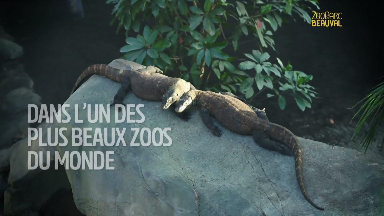 Musique de la pub   ZooParc de Beauval 2021