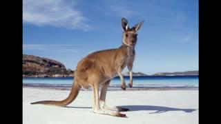 Как у кенгуру появилась сумка. Аудио сказка.