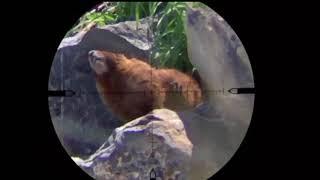 Rockchuck Compilation through Side-Shot