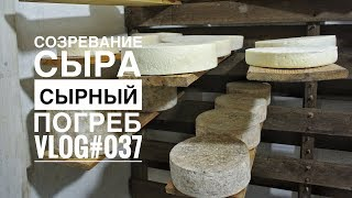 видео: Созревание сыра в сырном погребе