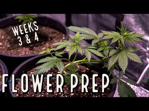 Season 3 (Weeks 3 & 4): Flower Prep and Catastrophe