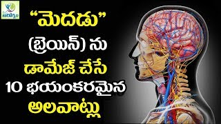 These Things Can Effect Your Brain - Mana Arogyam Telugu Health Tips