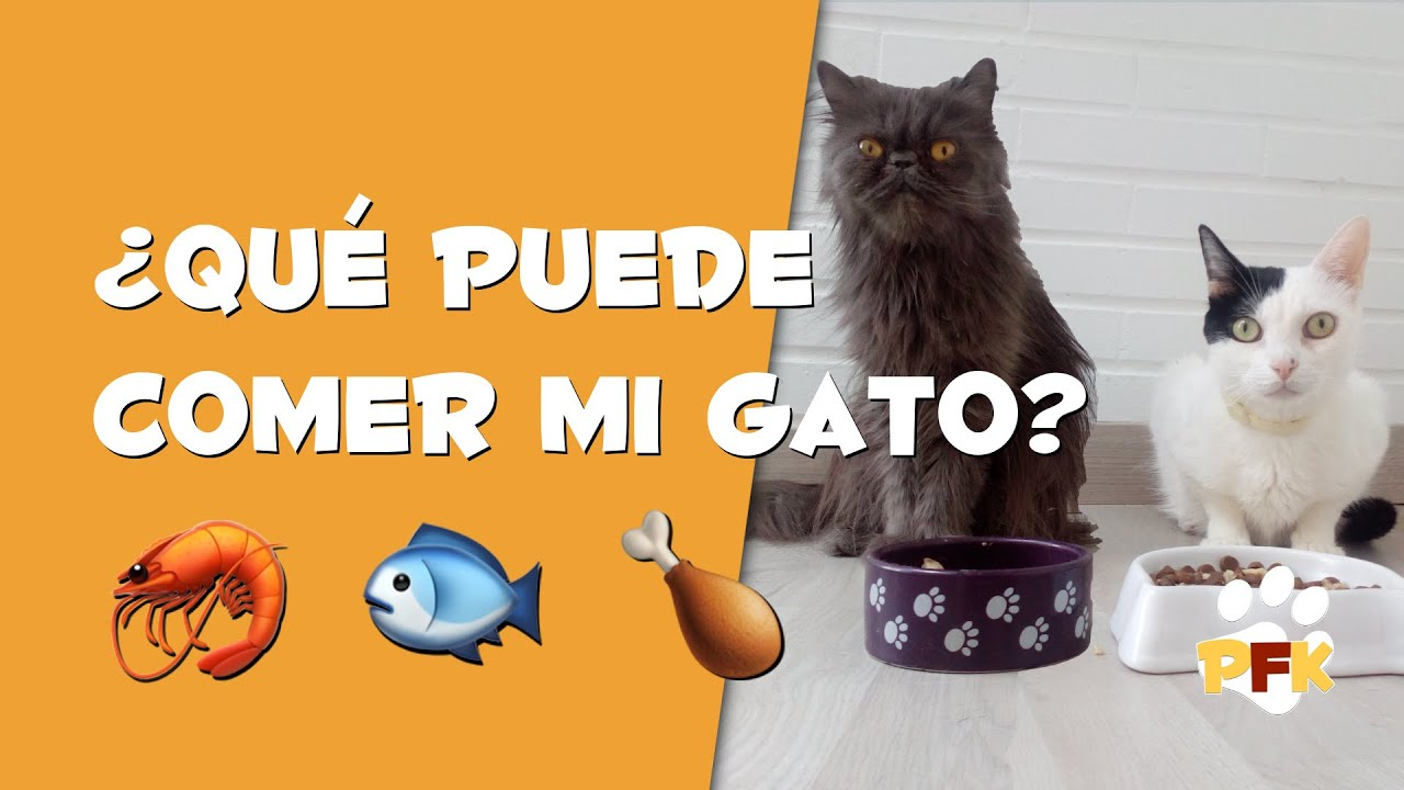 Que Comen Los Gatos Comida Para Gatos Pets Family Kids Youtube