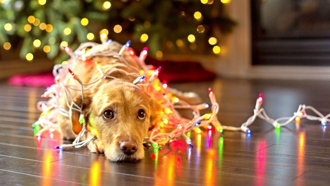 New Hallmark Movie 2017 - Great Christmas Rlease Movie 2017 - Christmas Movies Live 24/07