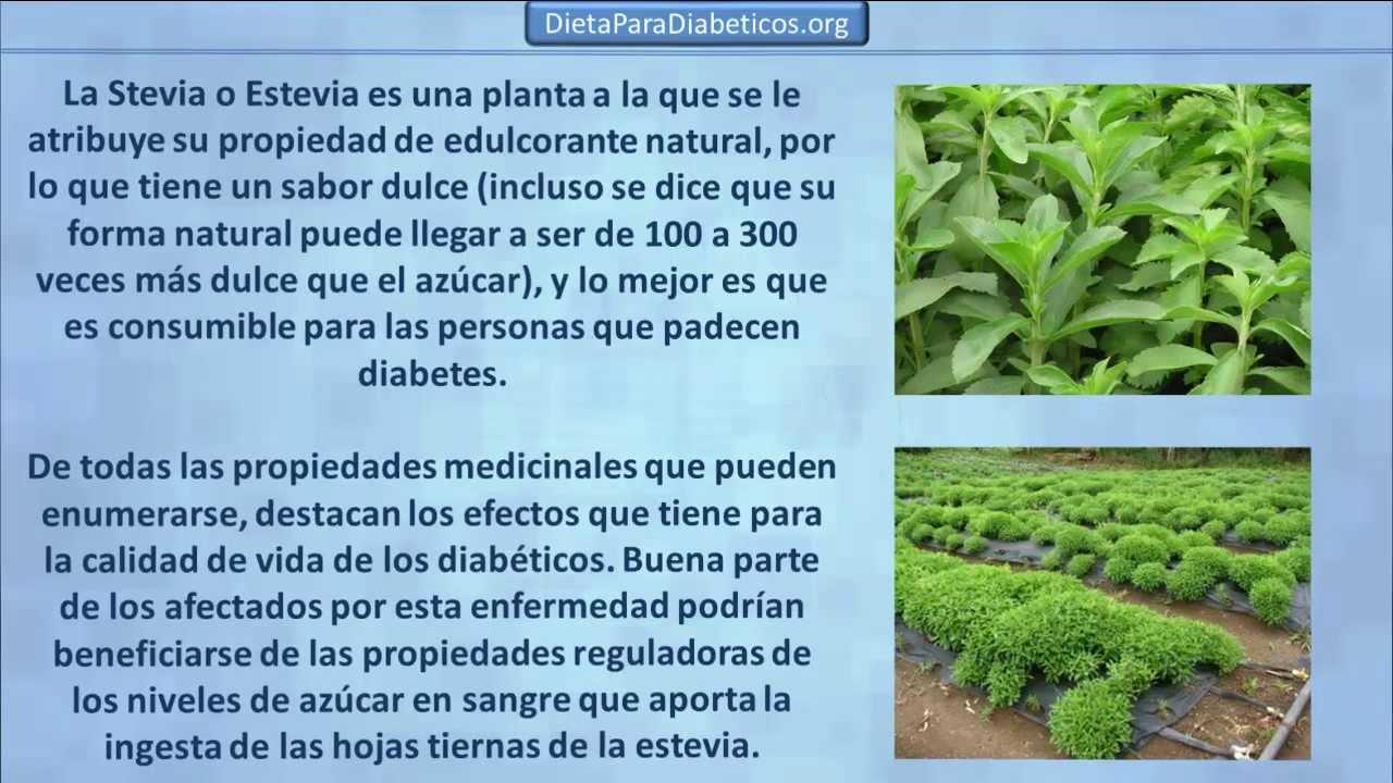 las propiedades de la stevia