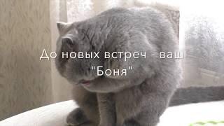 """Лайф -Хак  от  канала """"Пословицы и поговорки"""""""