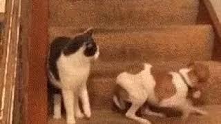Когда сломал собаку
