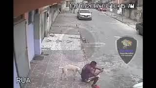 perro se orina en la espalda de un hombre mientras chatea gracioso fail humor