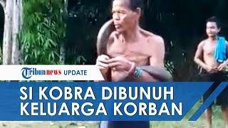 Download lagu King Kobra yang Gigit Pawang Ular di Kalbar Dibunuh Keluarga Korban