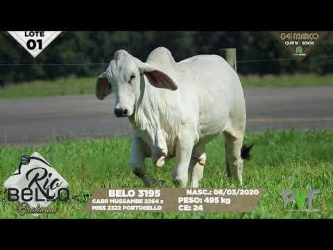 LOTE 01   BELO 3195