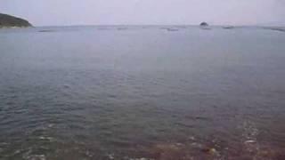 錦海湾のサヨリ釣り