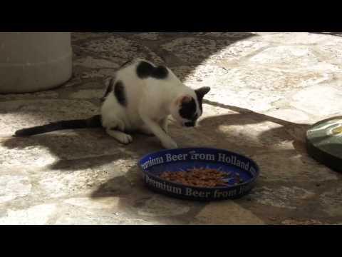 głodny kot w Dubrowniku - hungry cat in Dubrovnik