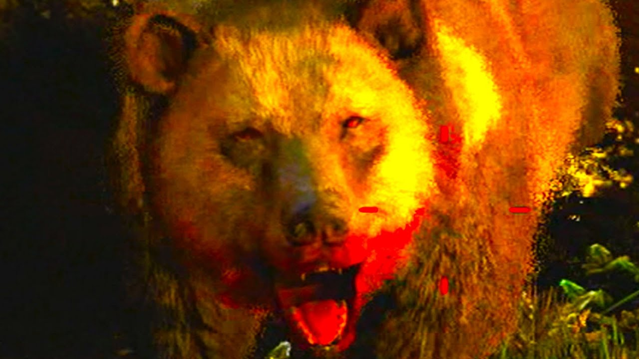 Far Cry 4: Ghost Bear Hunting Method (FC4 Rare Animals