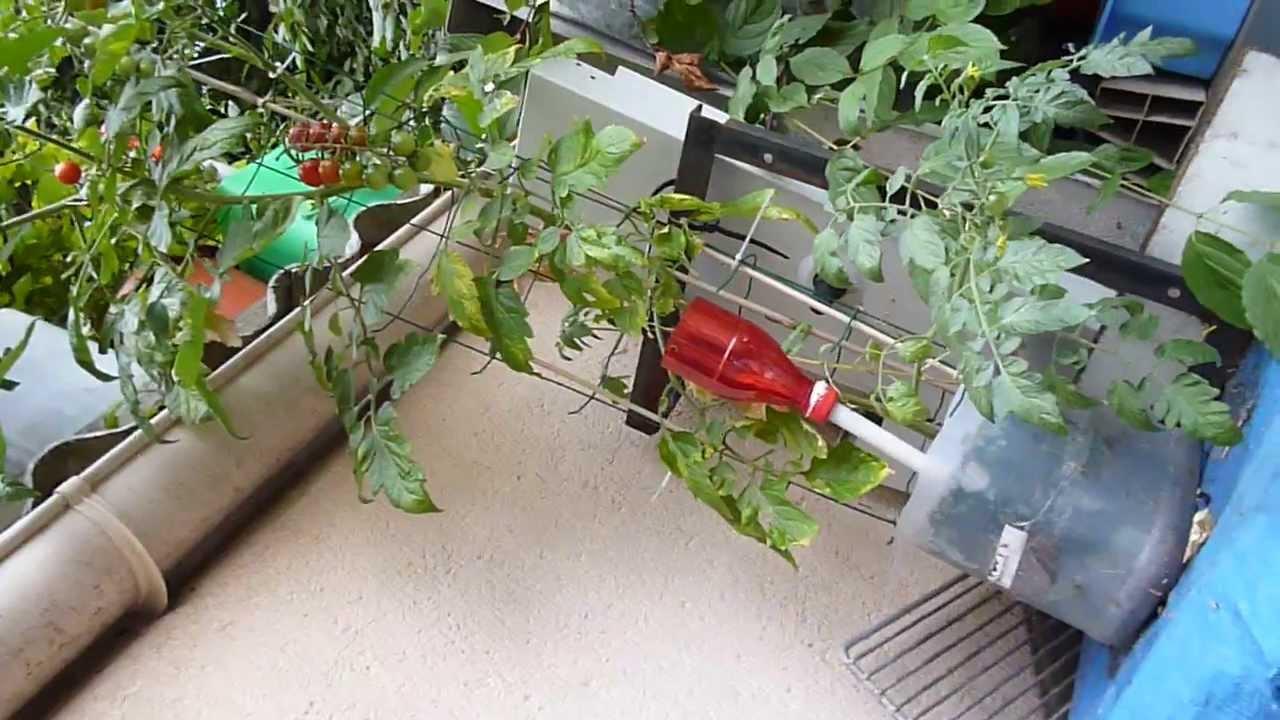 tomates cerise en bac r serve d 39 eau bidon de 5l r cup r youtube. Black Bedroom Furniture Sets. Home Design Ideas