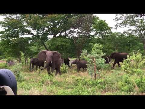 Elephant crossing, part 1, Hwange National Park