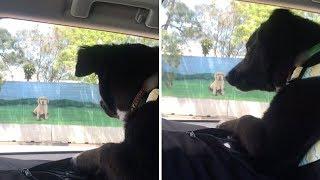 Pooch Barks At Billboard Of Dog Across Street