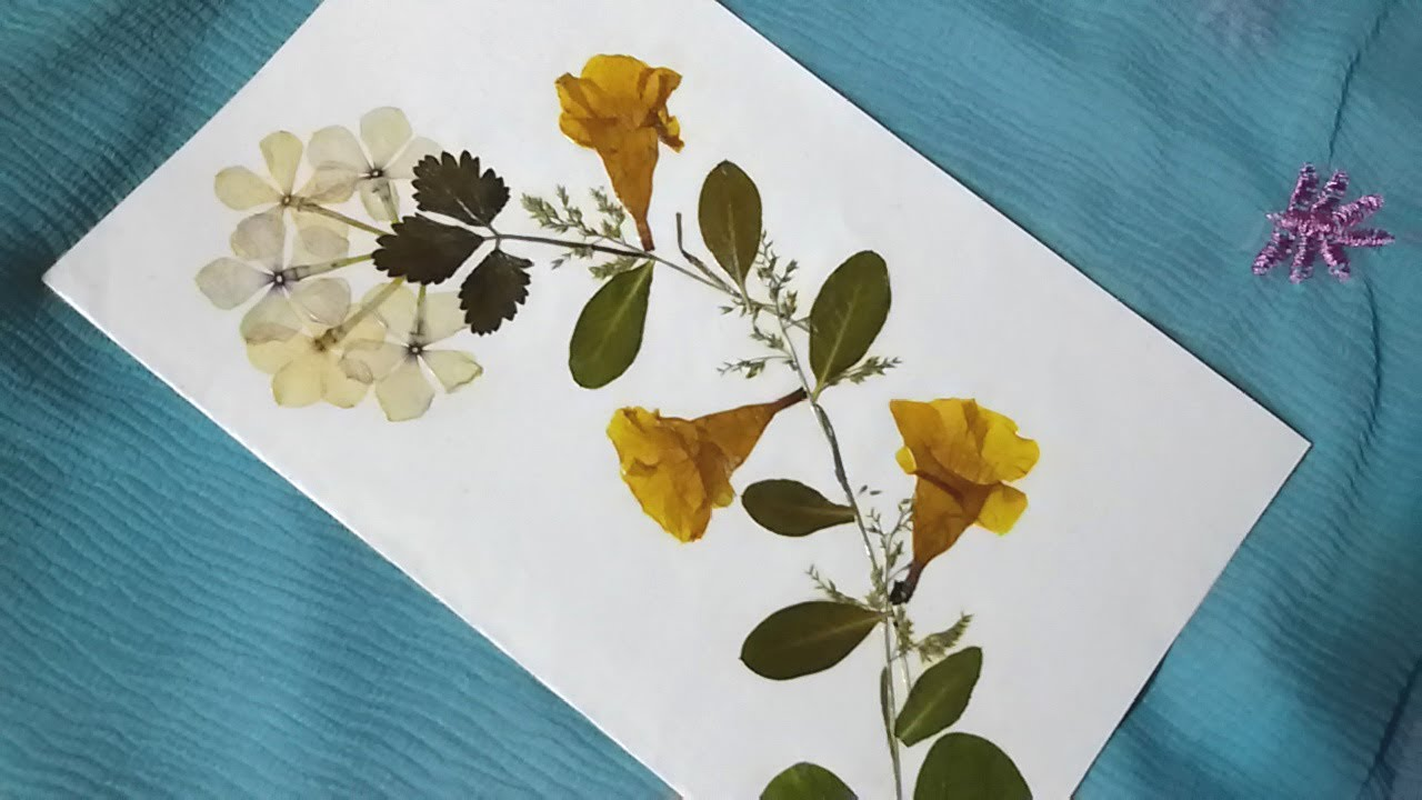 Dry Flower Art Greeting Card Making Tutorial DIY