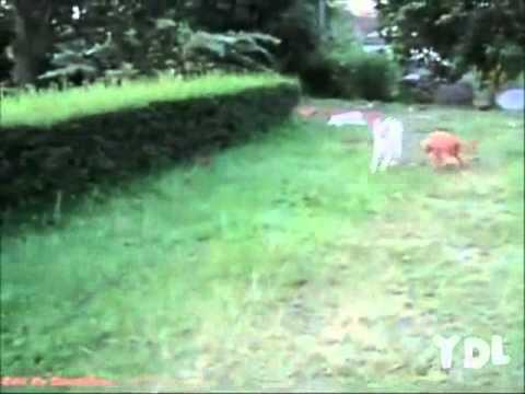 video de perros graciosos – Vine perros FAIL