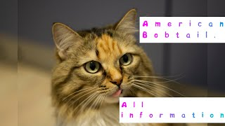 American Bobtail. Pros and Cons, Price, How to choose, Facts, Care, History