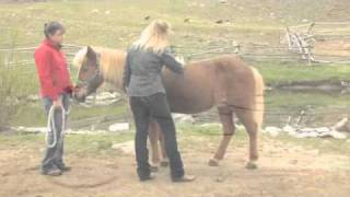 The Exclusive Reiki: Energy Healing for Horses DVD by Anna Twinney - Coming this Summer!