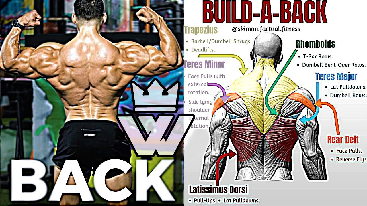 14 EXERCISES TO BUILD A BIG BACK