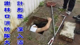 2011.07.26 【照生會貓狗119特查部】林口救援鬆獅犬