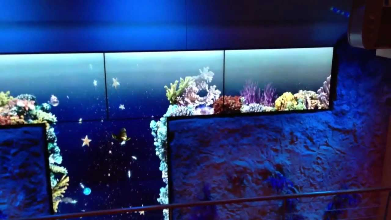 aidastella unterwasserwelt aquarium im vorderen treppenhaus youtube. Black Bedroom Furniture Sets. Home Design Ideas