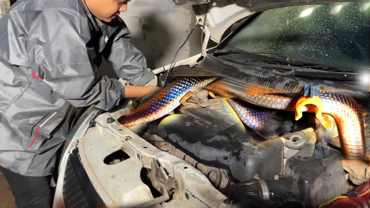 सावधान, कार से निकला कैसा सांप कार मालिक कार में जाने को तैयार नहीं, Snake Rescue in car, Amazing