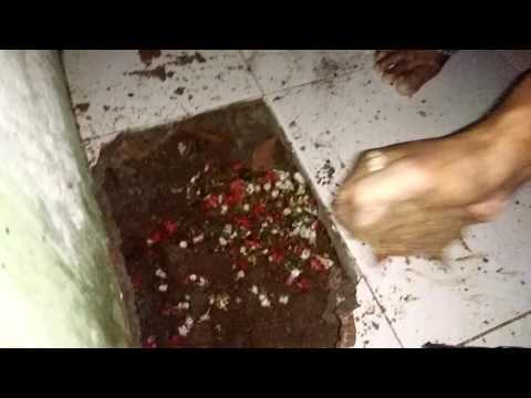 Penangkapan Jengglot Di Jati Kramat