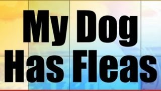 Basic Ukulele Lessons - 06a - My Dog Has Fleas (Key of C)