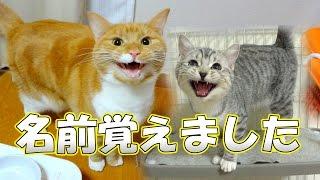 猫 鳴き声 猫ズ 完全に自分の名前を覚える the cats understand each name