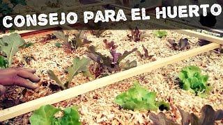 Acolchado o cobertura con viruta  de madera(AGRICULTURA ORGÁNICA)