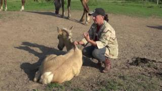 Характер лошади во главе угла